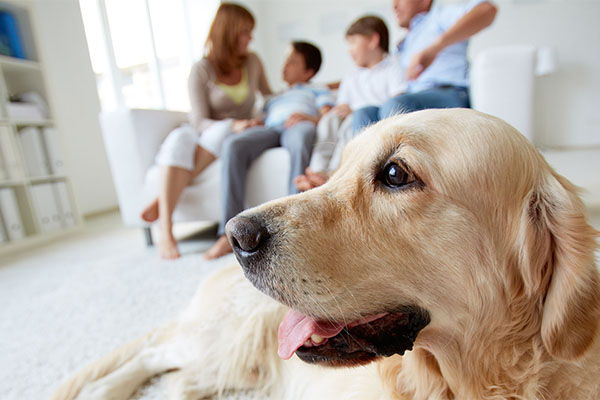 Survive Pet Allergies without Getting Rid Of Your Beloved Pet